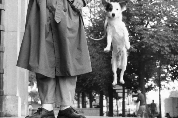 צילום - כלב הולדוג ונעלי עקב בצילום שחור לבן