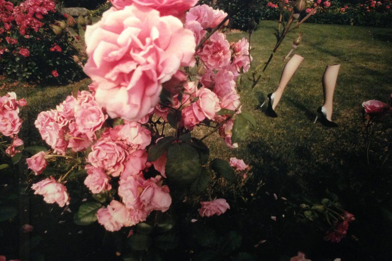 פרחים ונעליים