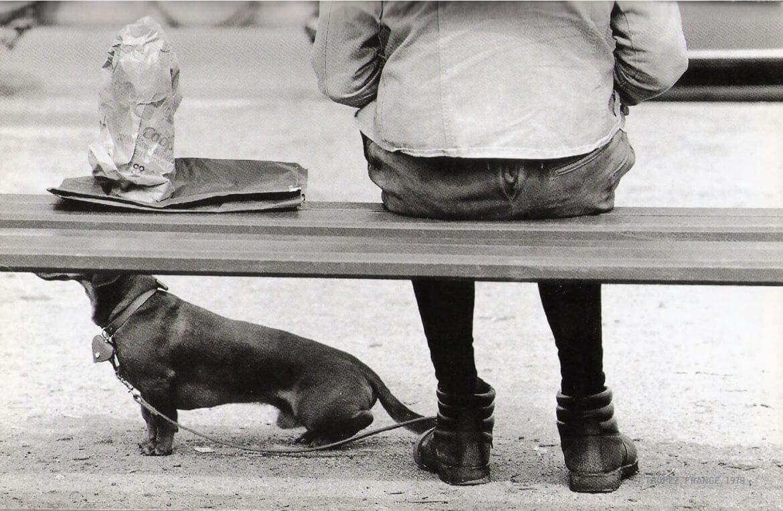 נעליים בצילום וכלב תחש צופה אל האופק בצילום שחור לבן של אליוט ארוויט