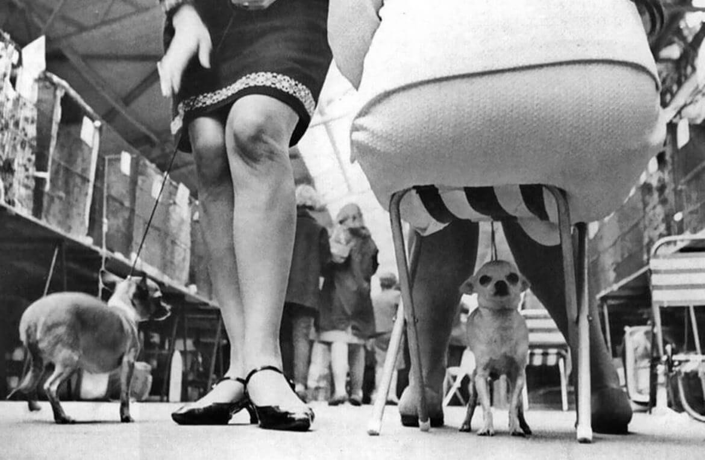 צילום של שני כלבים ושתי נשים עם נעלי נשים