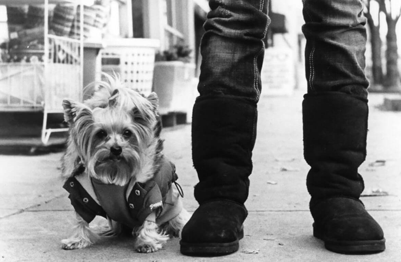 מגפוני בד גבוהות וכלבה קטנה לבושה בביגוד מחמם בצילום שחור לבן של אליוט ארוויט