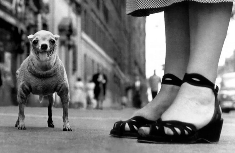נעלי עקב וכלב מבוגר מדגם קטן בצילום שחור לבן של אליוט ארוויט