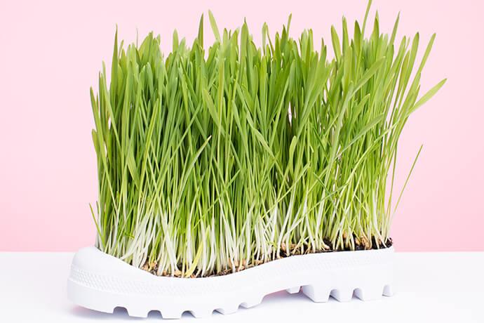 אמנות - סוליית Putput ככר פורה לצמיחה של עשב