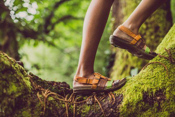 נעלי אל נטורליסטה בטיפוס על עצים מלאי טחב