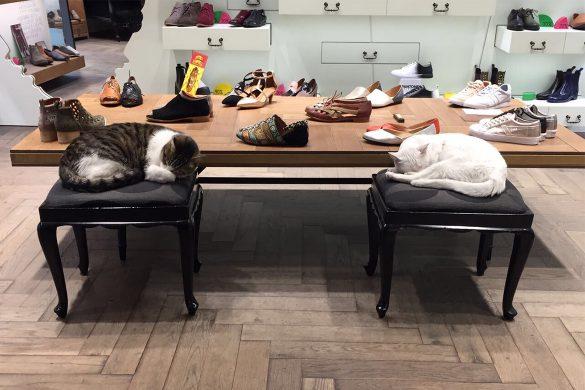 על חתולים ושופרנים - חתולים בסניף