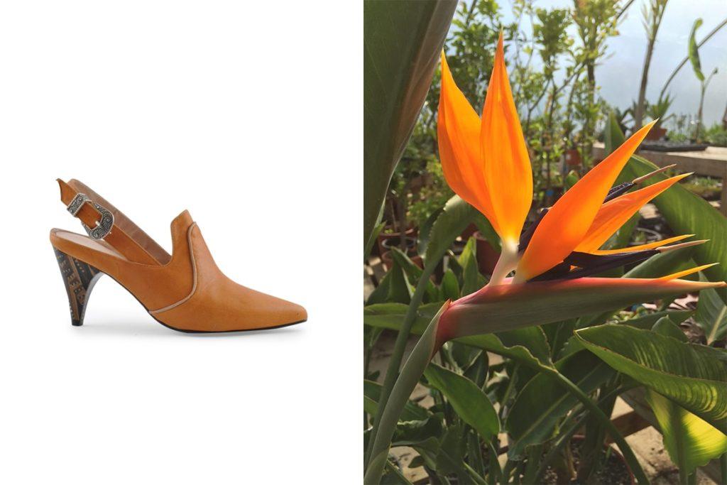נעליים של שומייקר ופרח ציפור גן עדן